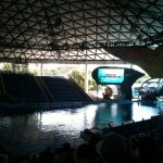 This is the arena to watch Shamu, not a bad seat in the house.