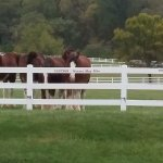 horses out in pasture