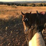 Foto de M Diamond Ranch