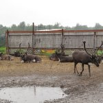 Photo de Reindeer Farm