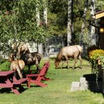 Elk roaming the grounds at PLB.