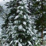 Snow in September in Jasper