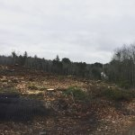 beginning phase of the massive clear-cutting, prior to blasting and drilling of 25 acres of wood