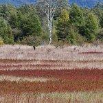 Foto de Odashirogahara Field