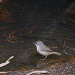 Foto de Girraween National Park