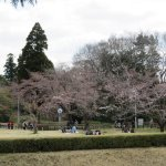 People picknicking under the cherry blossoms in Sakura Castle Park