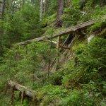 Waalwege Anlage, quer durch den Wald angelegt 2