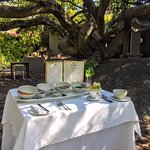 Breakfast under a ancient Rock Fig Tree with birdsong