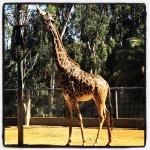 Photo de San Diego Zoo