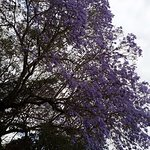 Tree on the grounds...love the purple flowers!