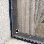 Hole in fly screen