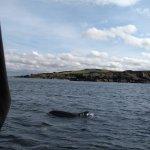 Dolphins surrounding the rib