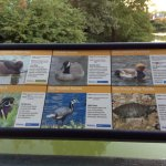 Information about birds
