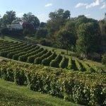 Stonehill Vineyard