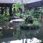 Foto de Paradisus Punta Cana Resort