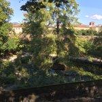 View of arboretum