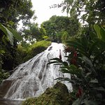 Photo de Shaw Park Gardens & Waterfalls