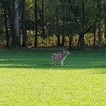 Wildpark Dusseldorf Foto
