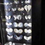 様々な真珠貝