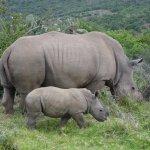 Photo of Kariega Game Reserve - River Lodge