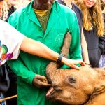 Mishak with an orphaned elephant at the DSWT