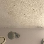 Mouldy bathroom ceiling