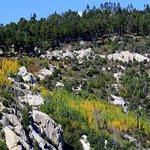 View from Aspen Vista