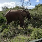 Photo of Pumba Private Game Reserve