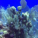 otherworldly coral reef
