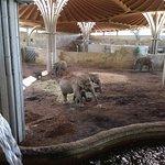 Blick in das beste Elefantenhaus Deutschlands und auf Europas größte Elefantenherde