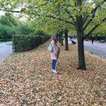 Autume leaves