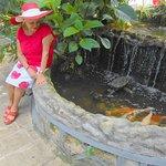 Evita's Koi fish pond