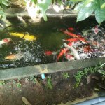 Photo of Chayada Garden House & Resort