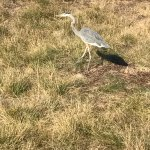 صورة فوتوغرافية لـ Half Moon Bay Golf Links