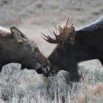 Photo of Antelope Flats