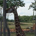 cmh zoo