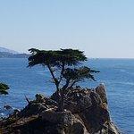 Kissing Rock, Lone Cyress tree