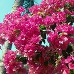 Beautiful mature plantings