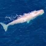Fabulous sperm whale