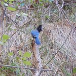 Songbird Spotted on Trail