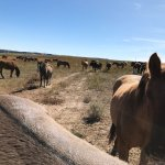 Foto de The Black Hills Wild Horse Sanctuary