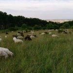 Die Perchtoldsdorfer Heide