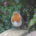 This was one of the friendly residents that followed us around the tour of the garden.