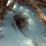 Lionfish at BioRocks