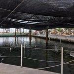 La gran piscina en contacto con el mar