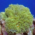 Nemo  and family