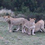 Photo of Gondwana Game Reserve