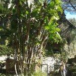 Photo of Giardini La Mortella