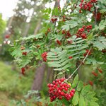 We could see a lot of wild berries too.