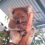 i think its kuala bear